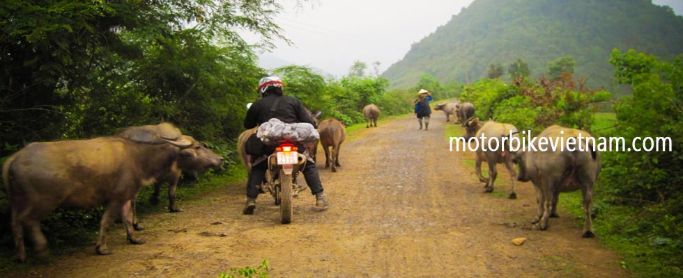 Motorbike Vietnam Adventure Tours - Guided Motorbike Adventures: Vietnam off-road motorbike tours or self guided motorcycle/scooter rentals from Hanoi, touring in Ha Giang province